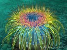 Sea+anemone | Kunstnet / Werke / Digitale Kunst / Tiere / Seeanemone / Sea Anemone