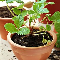 Don't have the space for a garden? You can still plant veggies using these easy container gardening tips.