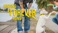 ADOPT ME!10 Tips for Finding the Perfect Forever Home for Your Foster DogBy Katie Shannon10. Profile: Create a captivating profile by including interesting quirks, personality traits and favorite activities that readers can relate...