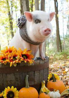 keepin' piggy warm...Pig