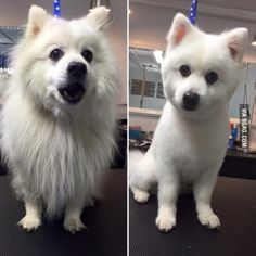 My dog after a professional cut, before and after