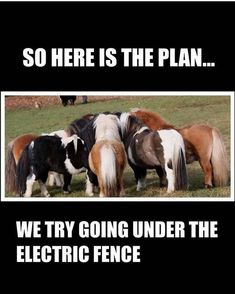 424 Best Horse Funnies & Sayings images in 2019 | Funniest