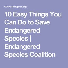 10 Easy Things You Can Do to Save Endangered Species Save Wildlife, Wildlife Nature, Endangered Plants, Endangered Species, People Can Change, Rare Species, True Relationship, Create Awareness, Nature Center