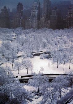 NYC. White, silent night in Central Park