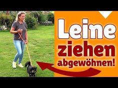 Hundeerziehung ohne Stress - Der sinnvolle Spaziergang verknüpft mit Hundeerziehung ohne Stress - YouTube
