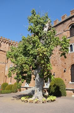 Discovering the history and the wines or Barone Ricasoli