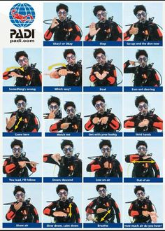 on Scuba diving hand signals! Learn this and much more with a PADI certification at Squalo Divers! Learn this and much more with a PADI certification at Squalo Divers! Scuba Diving Quotes, Best Scuba Diving, Scuba Diving Gear, Cave Diving, Cancun Diving, Scuba Diving Courses, Diving Suit, Cozumel, Learn To Scuba Dive