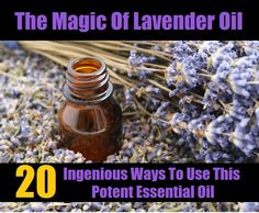 The Magic Of Lavender Oil - 20 Ingenious Ways To Use This Potent Essential Oil