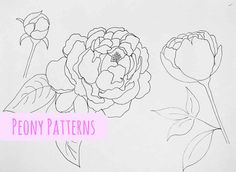 Peony Patterns - free download. Use them for painting, crafting, embroidery, appliques or even coloring pages!