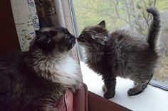 kitten kiss (photo by lalalaurie)