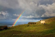 Watching the Rainbow   Hy folks. How are you doing? I've been to Ireland the last couple of days and had a great time. Got some really cool impressions pictures and videos. Here's one of them. I got up very early in the morning and went for a sunrise shooting to a beach at the Dingle peninsula in County Kerry. Afterwards I drove up the Connor Pass to the top and got this great view. And guess what ... I've been completely alone. No tourists in sight. Just the rainbow the sheep and me. What a…