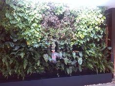 Jardín vertical interior - Bosque tropical