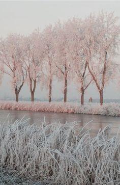 .Winter Pink°°