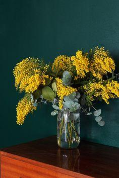 Vert Basque de Dulux Valentine.  Bouquet de Mimosa.  Décoration salon Mademoiselle Claudine.