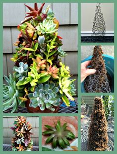 10 Magical Succulent Centerpieces Ideas for Your Table Garden inspiration Succulent Tree, Succulent Gardening, Succulent Terrarium, Terrarium Ideas, Cacti Garden, Indoor Gardening, Succulents In Containers, Cacti And Succulents, Planting Succulents
