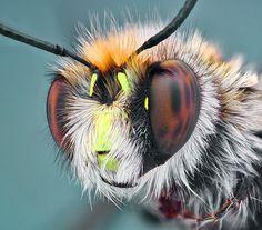 Shaggy Bee by Omid Golzar