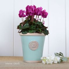 Kew Long Tom Pot in Tiffany Blue - Royal Botanic Gardens Plant Pot - Small Kew Gardens, Botanical Gardens, Garden Pots, Garden Ideas, Embossed Seal, Small Potted Plants, Plant Pots, Terracotta Pots, Growing Plants