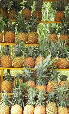 shelved pineapples