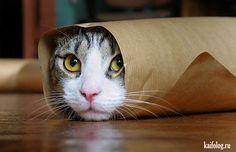 Шикарные коты (50 фото)