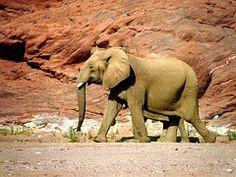 Éléphant, Animal Sauvage, Coriaces, Red
