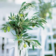 TheKnot.com - olive branches