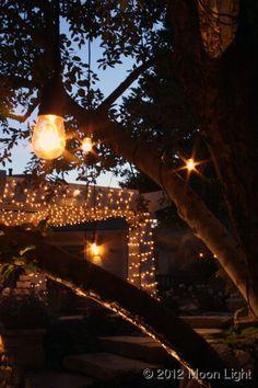old fashion edison bulbs lights in trees Moon Light Holiday Lighting Bar B Que, Edison Bulbs, Tree Lighting, Holiday Lights, Anniversary Parties, Trellis, Moonlight, Party Time, Wedding
