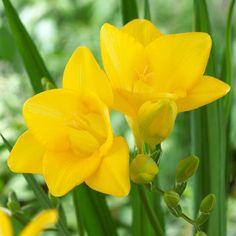 16 Best Orange Yellow Flowers Images In 2019 Yellow Flowers