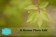 A Nature Photo Edit in Lightroom