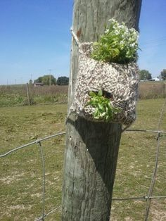 A crochet Hanging Plant...This is sweet - cause in time it will Disintegrate.
