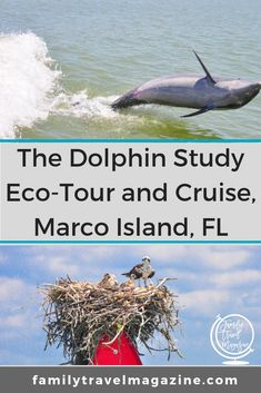 A review of the Dolphin Study Eco-Tour and Cruise in Marco Island, the only Florida activity listed in the book 100 Places That Can Change Your Child's Life Family Vacation Destinations, Florida Vacation, Florida Travel, Florida Beaches, Travel Usa, Travel Destinations, Naples Florida, Vacation Ideas, Vacations
