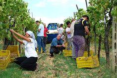 #Torciano #Winery #Wine