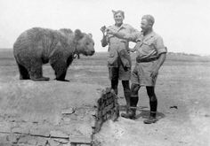 Wojtek (1942–1963) was a Syrian brown bear cub found in Iran and adopted by soldiers of the 22nd Artillery Supply Company of the Polish II Corps. He enjoyed wrestling and was taught to salute when greeted. With the company he moved to Iraq and then through Syria, Palestine and Egypt. He was officially drafted into the Polish Army as a private. During the Battle of Monte Cassino, Wojtek helped move ammunition. Following demobilization on November 15, 1947, Wojtek was given to the Edinburgh…