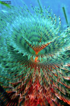 ><(((('> Tube worm, Mljet island, Croatia, Adriatic sea by Adi Drnda. <'))))>< A fine kettle of fish. Underwater Creatures, Underwater Life, Ocean Creatures, Under The Water, Life Under The Sea, Beautiful Sea Creatures, Beneath The Sea, Beautiful Ocean, Sea And Ocean