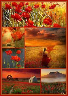 Red orange mood board