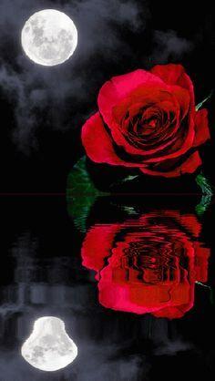 Imagen Gif de una Rosa con Reflejo y la luna para enviar el dia de San Valentin Rosas Gif, Image N, Romantic Images, Red Roses, Animation, Wallpaper, Awesome, Flowers, Anime