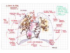 d356046ae844c 213 mejores imágenes de Escuela de enfermeria