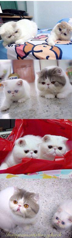 Cute Pet Pictures, Pics: Kittens, #Cat, #Cats, Piglets, Dogs, Puppies, Pets & Animals, Katze, Katzen, süß, klein, große Liebe, Katzenkind, Katzenkinder, schwarze Katze, schnuckelig, zuckersüß, große Augen