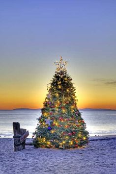 Wishing you a Merry Caribbean Christmas! Nautical Christmas, Tropical Christmas, Beach Christmas, Christmas Time Is Here, Noel Christmas, Beautiful Christmas, All Things Christmas, Christmas Lights, Christmas Decorations