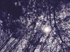 #sky#trees#sun#love#:)#Hungary#hiking#purple