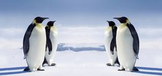 Antarctica, love the penguins!
