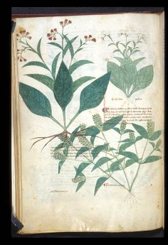 from British Library:  by Bartholomaei Mini de Senis, Platearius, and Nicolaus of Salerno.  -  Title: 	Tractatus de herbis (Herbal); De Simplici Medicina ; Circa instans; Antidotarium Nicolai.  Origin is Italy (Salerno) - between c. 1280 and c. 1310  -  written in Latin, with gothic script.   http://www.bl.uk/catalogues/illuminatedmanuscripts/record.asp?MSID=8319