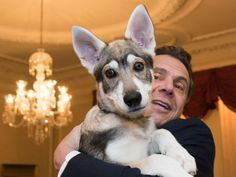 In This Feb 12 2018 Photo Provided By The Office Of Gov Andrew Cuomo The Governor Holds His New Dog Captain During A Conferen In 2020 Dogs New Puppy Dog Pictures