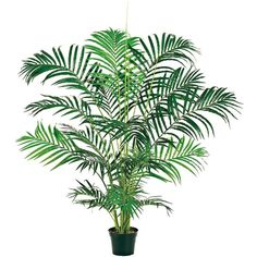 Areca Palm 5' Silk Plant in Pot ($150) ❤ liked on Polyvore featuring home, home decor, floral decor, plants, flowers, fillers, decor, green, flower arrangement and artificial flower stems