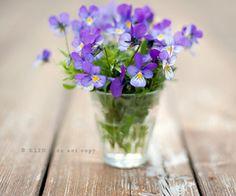 viole flower