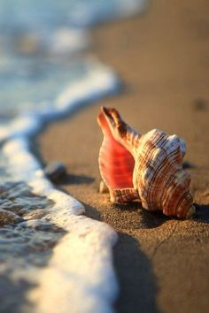 Beach photography using  a shell  by the ocean water #oceanphotography,