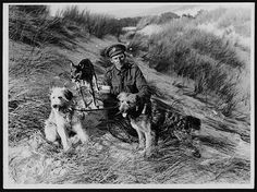 British messenger dogs with their handler, France, during World War I. A British soldier holds three dogs which were trained to carry messages between the lines and command during World War I. Usually the dogs had been strays, so one particular breed of dog could be not preferred. Generally, however, traditional working breeds, such as collies, retrievers, or large terriers, were chosen for messenger work.   Messenger dogs were based in sectional kennels near the front lines. On average each…
