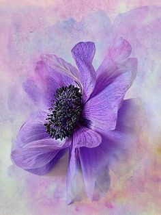 Anemone Flower photograph by Suzan Dowell-Glaser with a watercolor texture by French Kiss Collections. Art Floral, Design Floral, Watercolour Painting, Watercolor Flowers, Painting & Drawing, Watercolors, Painting Flowers, Watercolor Texture, Botanical Art