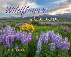 Wildflowers of Colorado