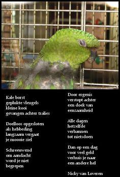 Mijn werk met papegaaien