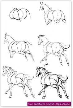 So many horse drawings! The site is in Russian but all of the how to's are like this pin Drawing Lessons, Drawing Techniques, Drawing Tips, Painting & Drawing, Drawing Drawing, Horse Drawing Tutorial, Drawing Ideas, Horse Drawings, Art Drawings Sketches